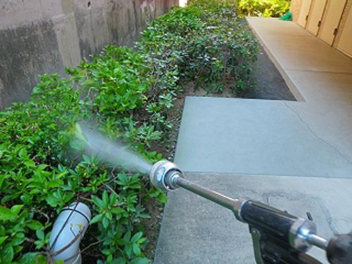 薬剤を散布します。 アジサイ(紫陽花)、シャリンバイに薬剤を散布します。 兵庫県宝塚市 マ...