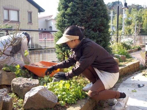 洋風ガーデン,花植え替え,ガーデンメンテナンス